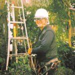 常緑樹と針葉樹の多くが剪定の適期です。