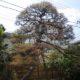 芝の管理とクロマツの樹勢回復